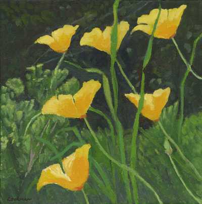 Coastal Poppies by Terry Lockman