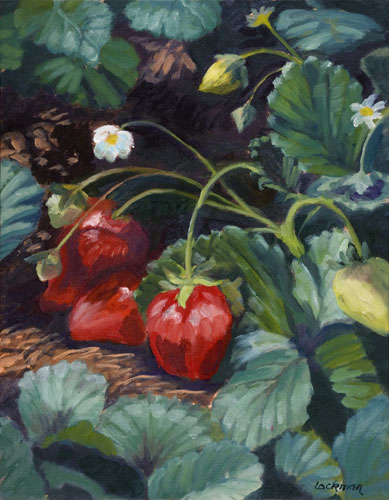 Strawberries at Little Organics by Terry Lockman